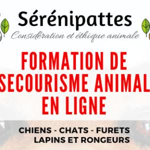 Formation de Secourisme Animalier + Lapins et Rongeurs – N1