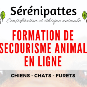 Formation de Secourisme Animalier Chiens, Chats et Furets – N1