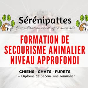 Formation de Secourisme Animalier Chiens, Chats et Furets – N2